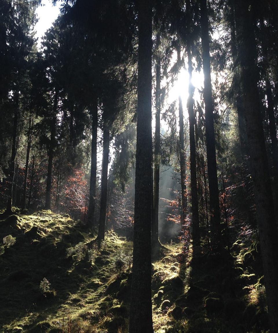 MTB-in-foresta