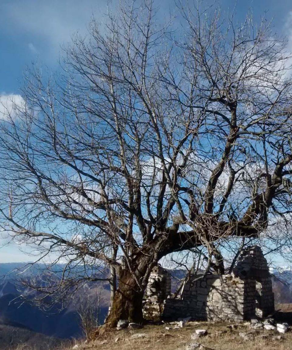 corso-riconoscimento-alberi